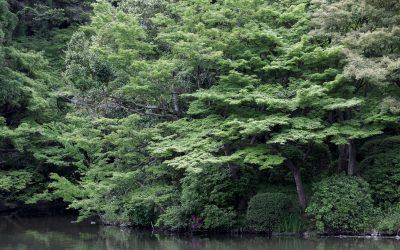 Le jardin botanique de Kyoto : un paradis !