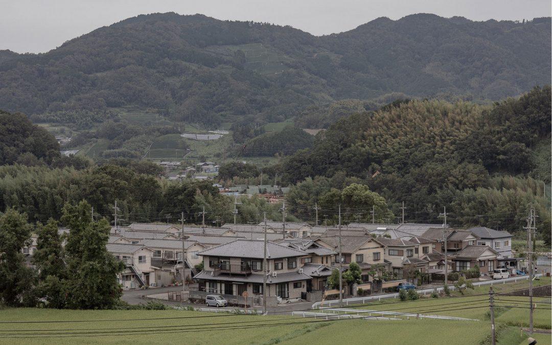 Culture de thé bio dans la région de Kyoto