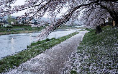 5 endroits pour admirer les cerisiers en fleurs à Kyoto, loin des foules