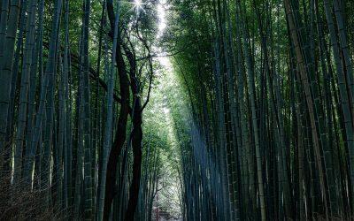 3 pistes inspirées du Japon pour mieux vivre au présent