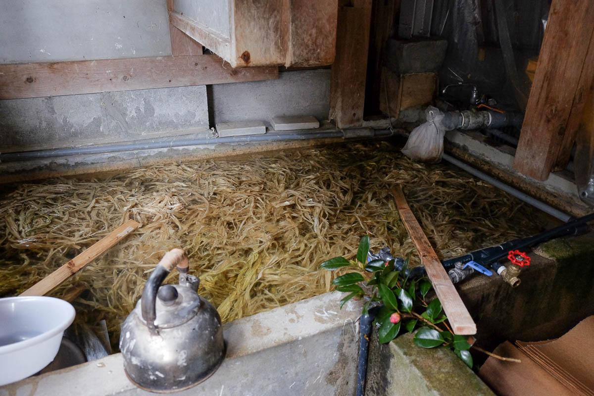 Fibres de kozo mis en trempe chez Hasegawa-san