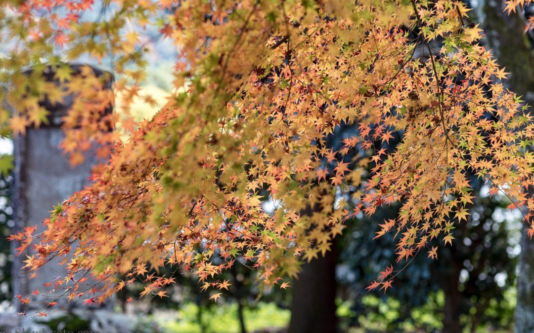 Automne à Kyoto : 5 endroits pour admirer les momiji