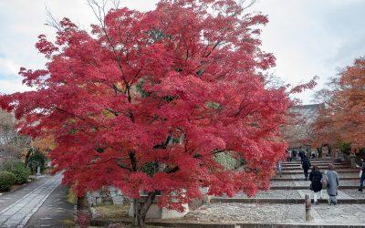 Kyoto, au fil des saisons